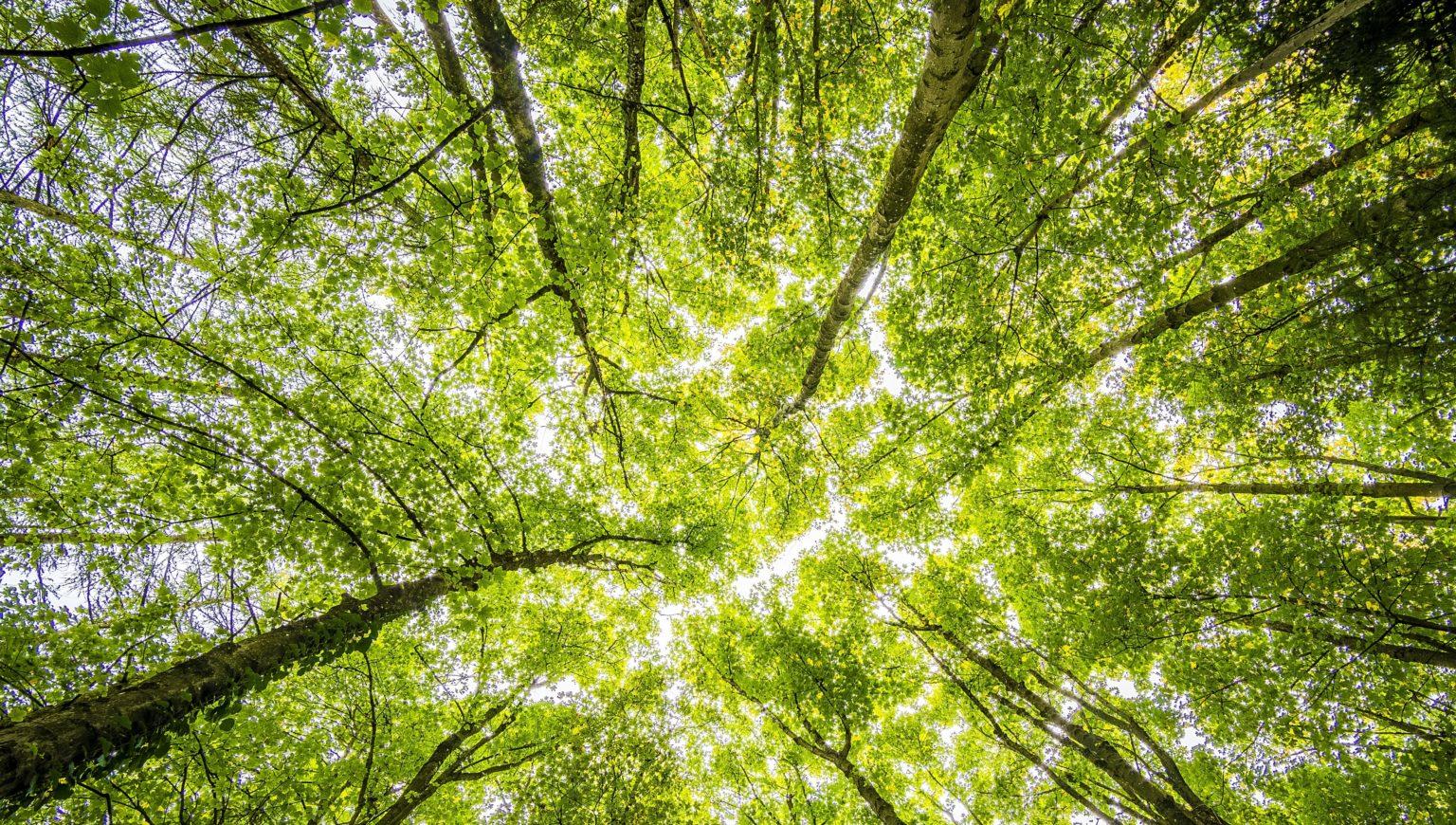 Webinar Gruppo Imprese del Verde - 21 luglio 2020